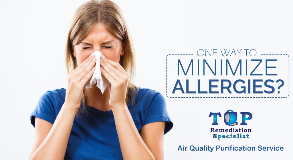 minimize allergies copy